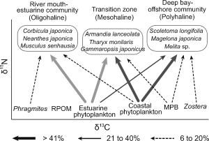 Isotopic variation of macroinvertebrates and their sources of organic matter along an estuarine gradient 이미지